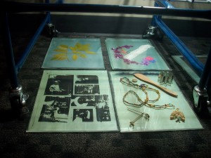 Cyanotype prints from a workshop at Madison Public Library wait to be washed.